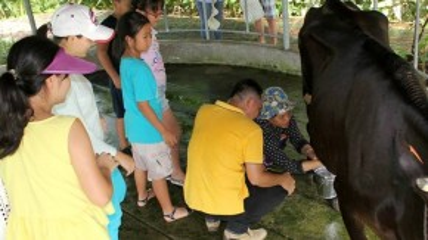 Học vắt sữa bò thu hút nhiều phụ huynh, học sinh tham gia.