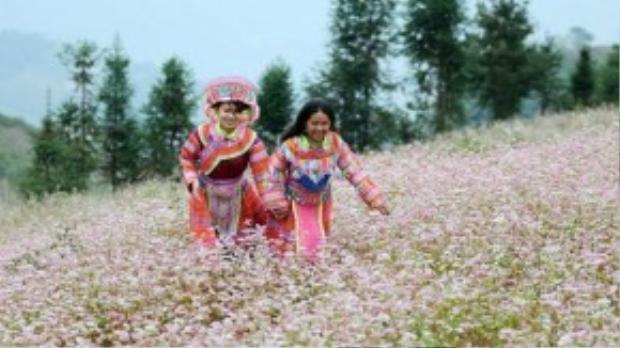 Cuối tháng 10, hoa tam giác mạch Hà Giang đã bắt đầu nở.