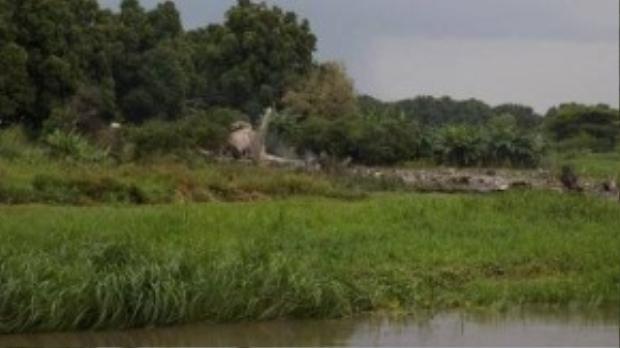 Hiện trường vụ tai nạn bên bờ sông Nile Trắng (Ảnh: Twitter)