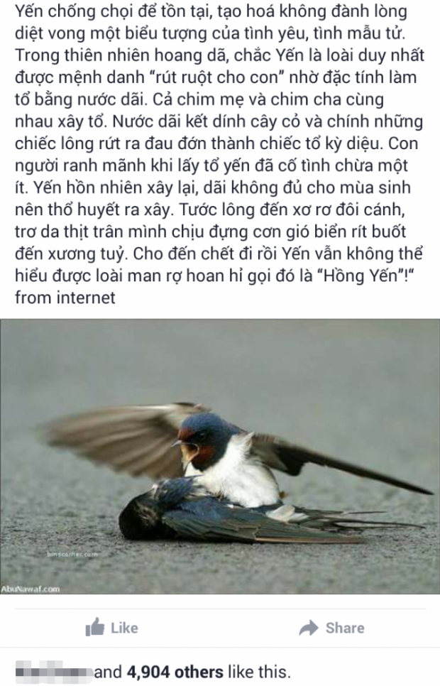 Kêu gọi ngừng ăn yến sào  sự thật nào về những chú chim yến?