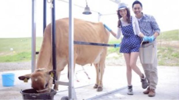 Trải nghiệm mà vợ chồng Trúc Diễm thích nhất là tự tay vắt sữa bò.