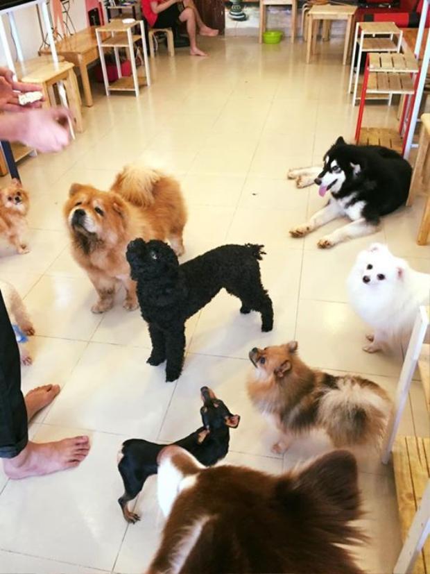 15 chú chó trong quán cà phê cún cưng của hotboy 9x bất ngờ bị đầu độc