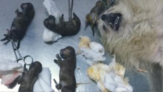 Chú chó xấu số Beta bị đánh thuốc độc đúng ngày sanh. (Ảnh: FBNV)