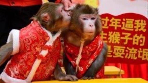 """Hai chú khỉ """"mi"""" nhau trong Lễ hội khỉ ở Hàng Châu, Trung Quốc."""