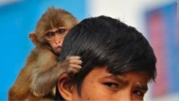 Chú bé người Nepal và con khỉ cưng của mình chờ năm mới đến.