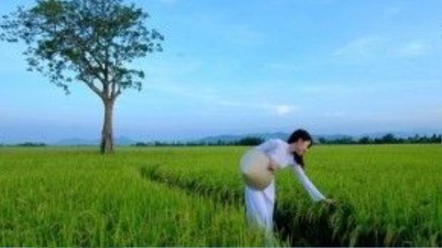 Phong cảnh miền quê yên bình và dung dị ở Phú Yên. Ảnh: Lê Minh