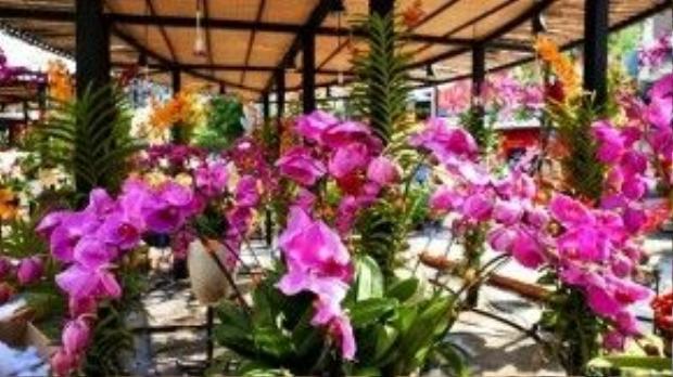 Khu vực trưng bày hoa địa lan hứa hẹn sẽ là nơi thu hút đông đúc du khách trong dịp Tết.