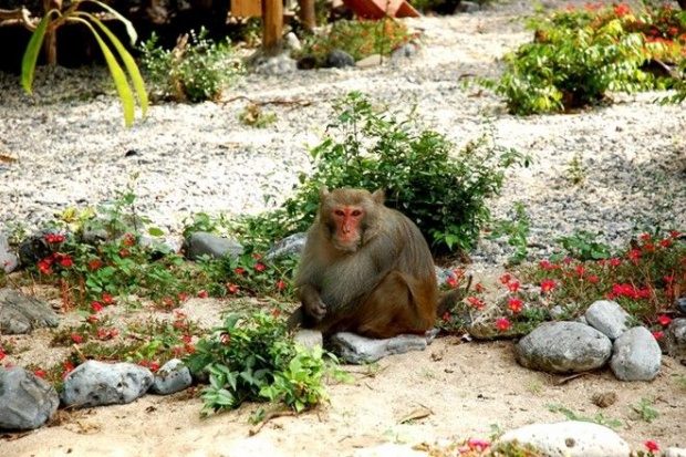 4 hòn đảo khỉ không thể bỏ qua khi đi du lịch năm Thân