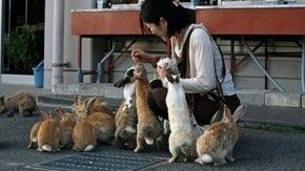 Giới trẻ thích thú khi cho thỏ ăn.