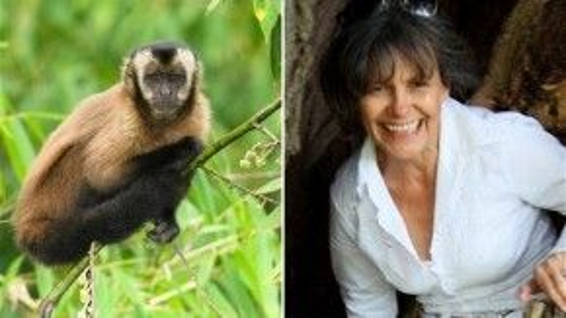 Marina Chapman và loài khỉ Capuchin đã nuôi bà hồi còn bé.