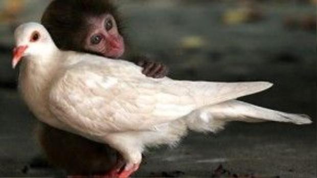 Tình bạn lạ lùng giữa khỉ và chim.
