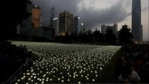 Ông SK Lam, giám đốc sáng tạo của công ty Pancom cho biết chi phí để lắp đặt 25.000 bông hoa tiêu tốn một khoản tiền gồm 8 chữ số.
