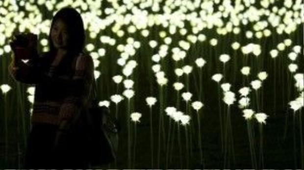 Sau Hồng Kông, hàng chục nghìn bông hoa hồng cũng sẽ được trưng bày ở Châu Âu và Châu Á.
