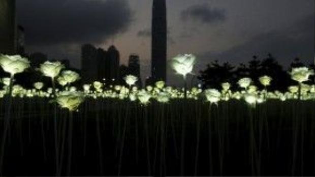 Theo nhà tổ chức, chỉ với 100 đô la Hồng Kông (gần 300.000 đồng), bất cứ ai cũng có thể sở hữu 1 trong hàng chục nghìn bông hoa hồng ở trong khu vườn ảo diệu này.