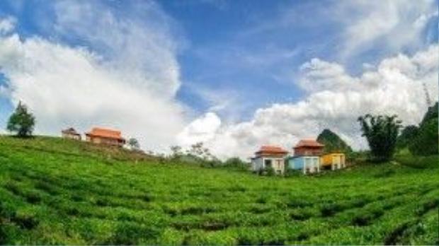 Những ngôi nhà sàn và bungalow container nằm giữa mênh mông đồi chè xanh biếc.