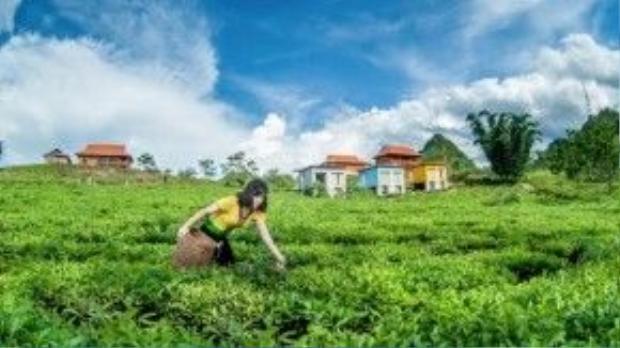 Không gian yên bình và xanh mát nơi đây cho du khách cảm giác hòa mình tuyệt đối vào thiên nhiên.