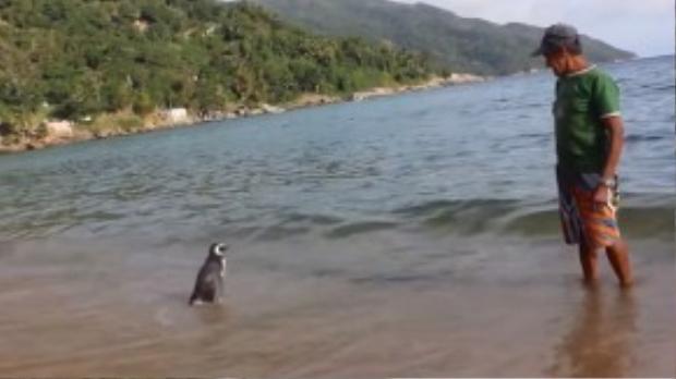 """Để đến thăm Joao, """"bé cụt"""" phải bơi một quãng đường xấp xỉ 8.000km. Tình cảm dễ thương giữa Dimdim và người bạn già khiến nhiều người không khỏi cảm động."""