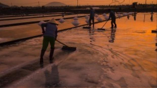 Từ sáng sớm, diêm dân đã phải thức dậy để ra đồng bắt đầu một ngày làm việc. Từng ụ muối sẽ được chất đống, gọn gàng và trật tự để thuận tiện cho việc thu gom.