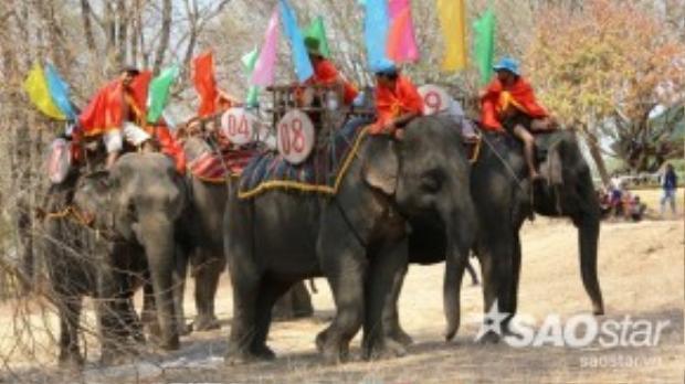 Suốt lễ hội sẽ diễn ra những hoạt động như đua voi, voi đá bóng, voi bơi qua sông… nhằm đề cao tinh thần thượng võ, tài nghệ của những vua săn voi Tây Nguyên. Vào cuối ngày hội, các chủ voi sẽ thực hiện nghi lễ cúng bến nước, tắm cho voi để cầu mong sức khỏe cho con vật của mình.