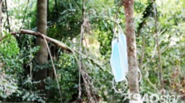 Từ lời truyền miệng, du khách đến chùa còn treo cả khẩu trang, ống hút lên khắp các cây trong chùa.Theo Thượng tọa Lâm Tú Linh, nhiều cây có nhánh thấp, chùa chặt bỏ để khách hành hương không cột dây, treo khẩu trang được. Tuy nhiên, họ vẫn cố tìm cách kéo nhánh cây ở nơi cao xuống để cột dây, túi nylon.