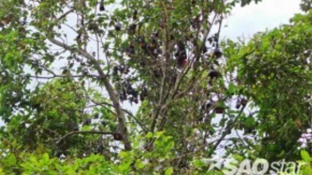 Chùa được biết đến rộng rãi với tên là chùa Dơi vì ngôi chùa này là địa điểm duy nhất trên cả nước tập trung hàng nghìn con dơi quạ, dơi ngựa treo lủng lẳng trên cây như những trái chín quanh năm.