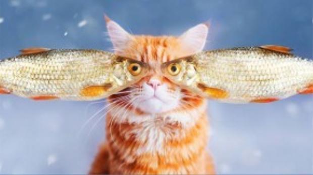 Được biết, Kotleta là một chú mèo thuộc giống mèo Nga.