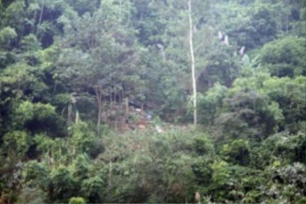 Khu rừng nơi ông Bình sinh sống nhiều năm qua.