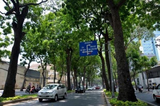 Không có việc đốn hạ 300 cây xanh ở Sài Gòn