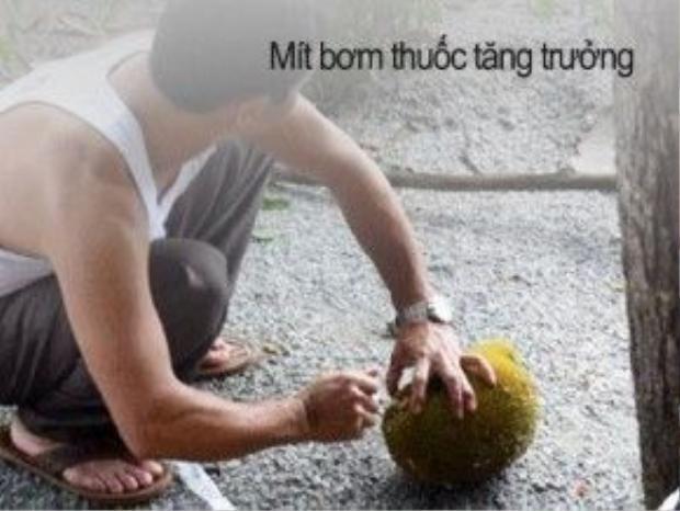 Tương tự với mít, nhưng nguy hiểm hơn khi mỗi trái được bơm thuốc trực tiếp vào ruột để những múi mít chín, có màu vàng bắt mắt.