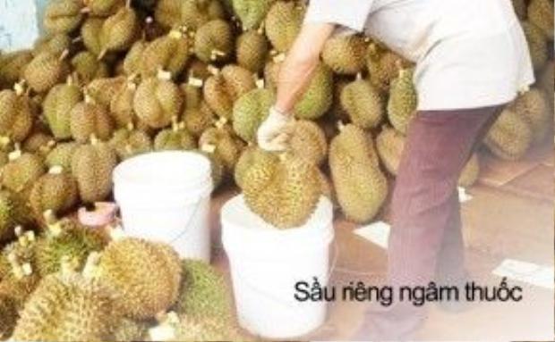 Trái cây ngâm thuốc để bán liền đã không còn xa lạ gì. Chỉ sau một đêm những trái sầu riêng xanh sẽ chín vàng, thơm ngào ngạt và bắt đầu được phân phối ra thị trường.