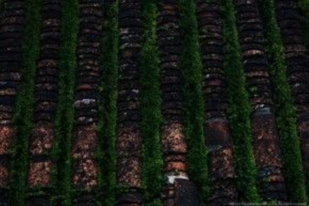 Mái nhà phủ kín màu thời gian ở Hội An. Ảnh: Na Sơn.