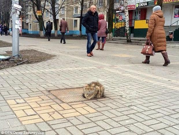 Cảm động chú mèo ngày ngày đợi chủ cũ quay về