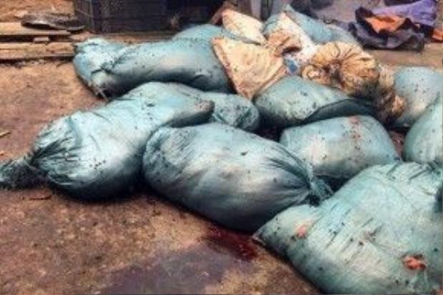 Nhiều bao tải mỡ chưa sơ chế để dưới nền nhà, rỉ nước.