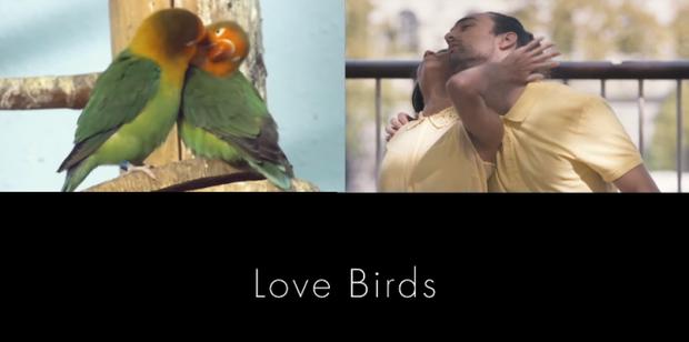 Vũ điệu tán tỉnh của các cặp đôi hệt như cách động vật tỏ tình