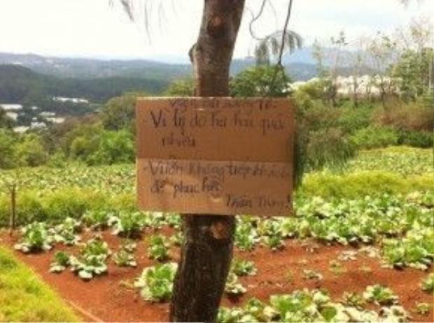 Bảng thông báo được treo ở vườn.