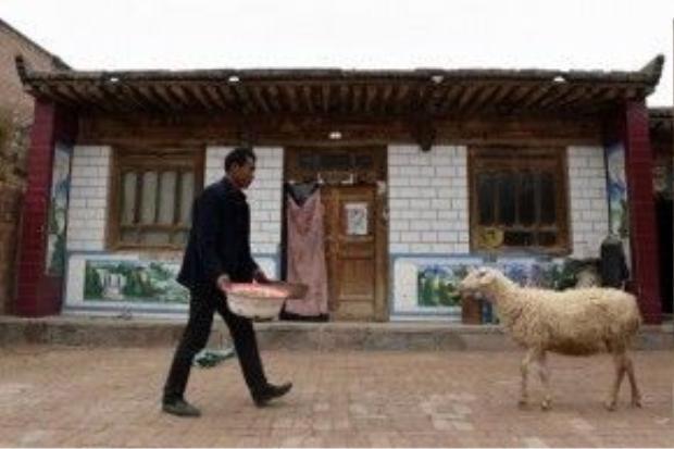 Mỗi ngày chỉ có cừu là những người bạn duy nhất.