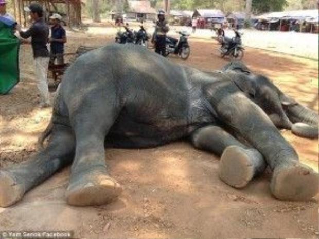 Cái chết của Sambo đã khiến nhiều người phẫn nộ về điều kiện làm việc mà công ty Voi Angkor đang thực hiện