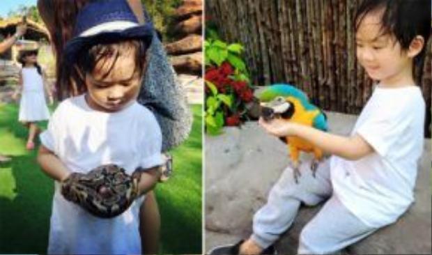 Các bé có thể đến gần các loài động vật mà vẫn đảm bảo sự an toàn.