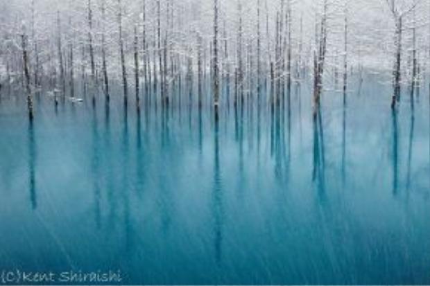 Hokkaido là hòn đảo lớn thứ hai ở Nhật. Với diện tích rừng tự nhiên rộng lớn, cảnh vật ở nơi đây sẽ khiến du khách đi từ bất ngờ này đến bất ngờ khác, ví như Blue Pond - ao nước màu lam ngọc nằm trên bờ trái của con sông Bieigawa.