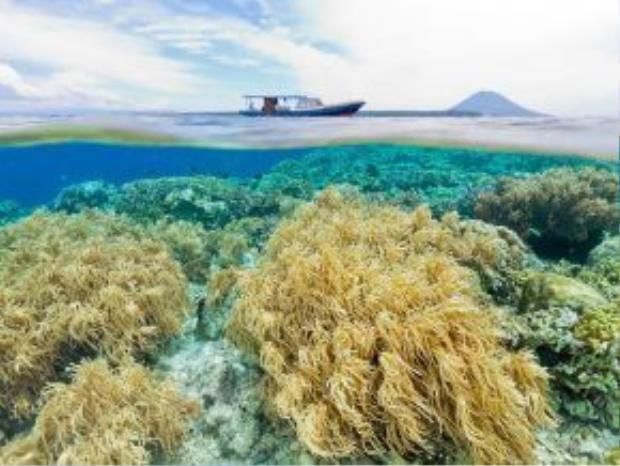 Công viên biển Bunaken, Indonesia: Với hệ sinh vật biển đa dạng cùng những rạn san hô rực rỡ, Bunaken là điểm đến lý tưởng cho những ai thích bơi lặn.