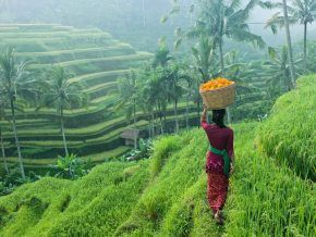 Ubud, Bali, Indonesia: Nằm ở thiên đường nghỉ dưỡng Bali, Ubud giống như một ốc đảo xanh yên lành, với ruộng bậc thang xinh đẹp cùng nền văn hóa ấn tượng.