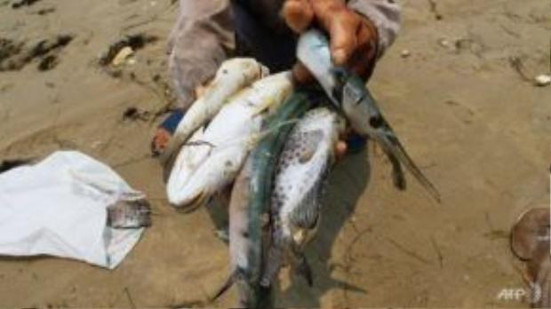 Cá chết tại bờ biển huyện Phú Lộc, Thừa Thiên Huế. Ảnh: AFP