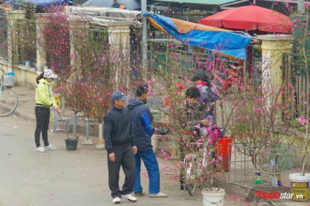 Ngay từ sáng sớm đã có khá nhiều người Hà Nội đi ngắm nghía, lượng hoa đào thời điểm này chủ yếu để phục vụ những người có nhu cầu chơi hoa sớm, thắp hương hay trang trí nhà cửa.