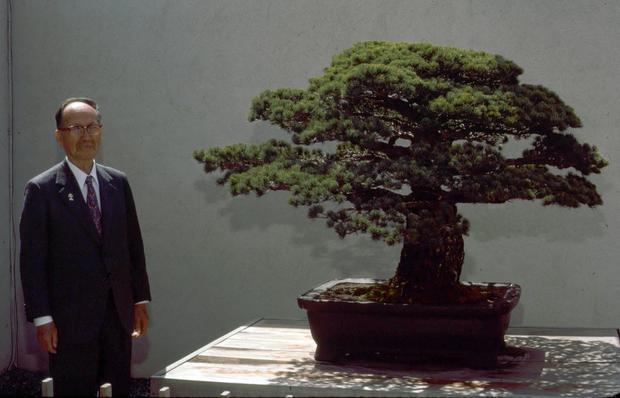 Ông Masaru Yamaki bên cạnh cây Bonsai gia truyền tại Mỹ, ảnh chụp năm 1977.