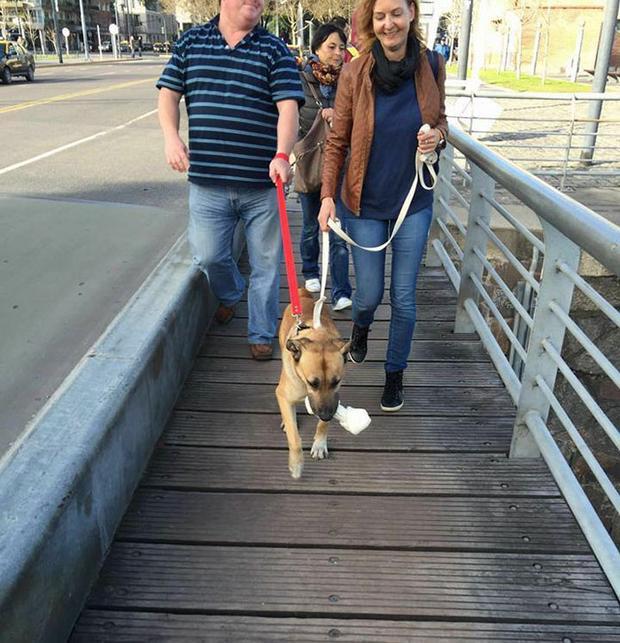 Chú chó lang thang giờ đã được chính ân nhân của nó nhận nuôi.