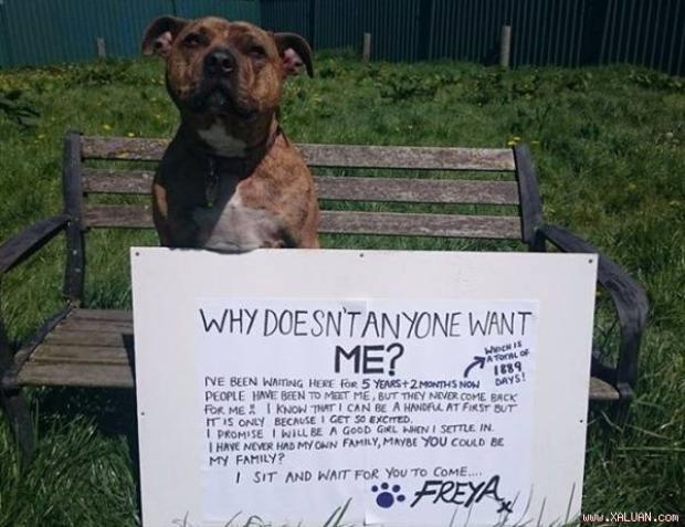 Cô chó bị từ chối nhận nuôi hàng nghìn lần.