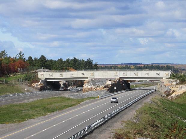 Cây cầu Ontario, Canada nổi tiếng với sự đầu tư kỹ lưỡng dành cho việc xây dựng dành riêng cho động vật hoang dã, thậm chí còn lắp đặt biển báo, hàng rào thép gai … để ngăn chặn tai nạn.
