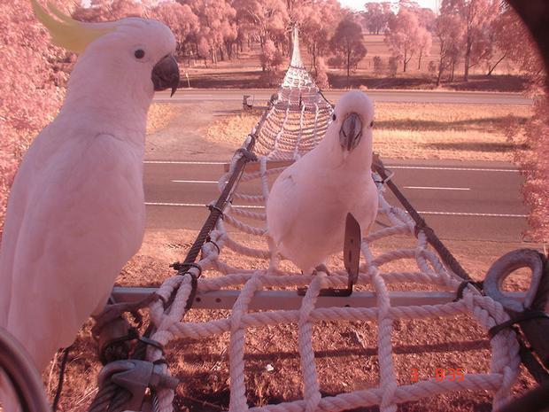 Được cấu tạo bằng những sợi dây thừng bản to, cứng cáp và khá chắc chắn, chiếc cầu dành cho những chú sóc hay vẹt được thuận tiện qua lại nằm phía trên của cao tốc Hume, thuộc tiểu bang Victoria, Australia.
