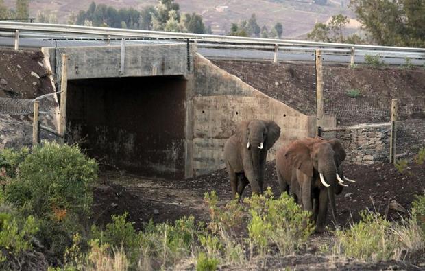 Những chú voi cũng có tuyến đường riêng tại khu bảo tồn động vật hoang dã tại Kenya.