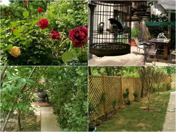 Bên ngoài căn nhà là khoảng sân rộng rãi, thích hợp với thú vui trồng hoa của mẹ nữ diễn viên.